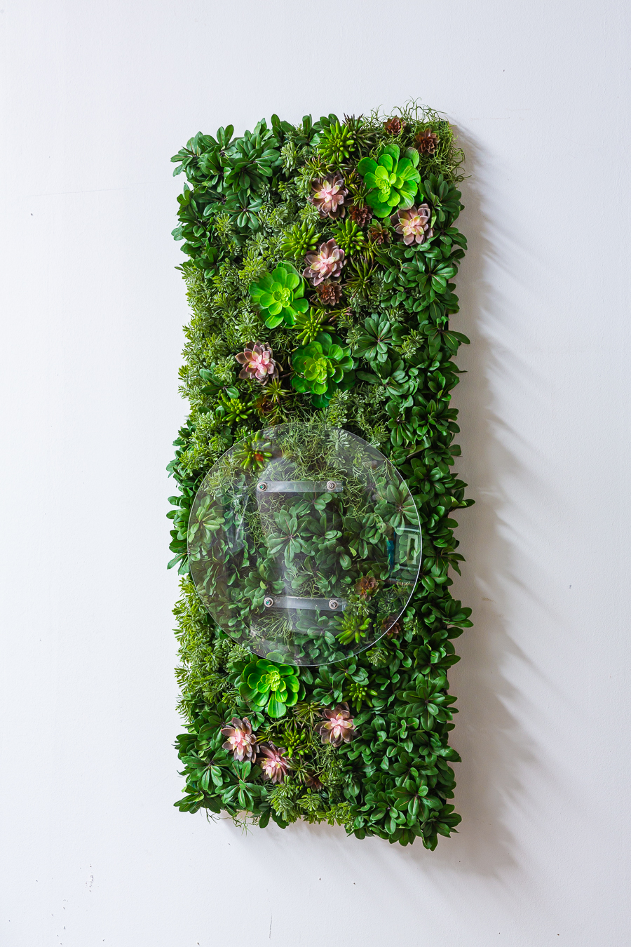 Desinfection, mounted, wall, hand sanitizer, succulents, medium, acrylic glass